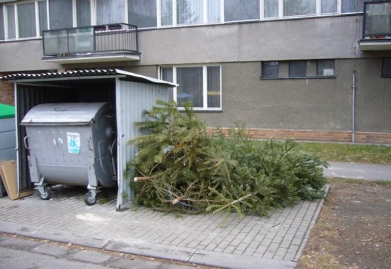 Vyhozené vánoční stromky u popelnic